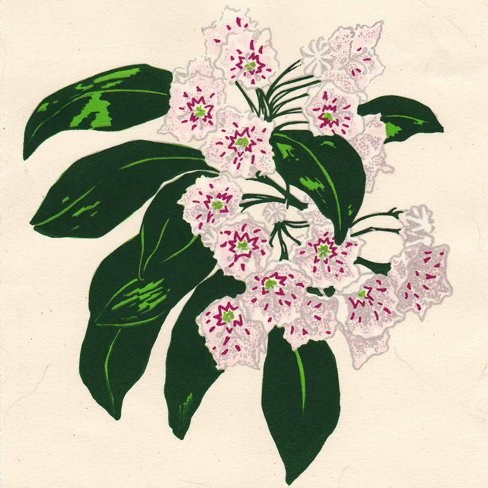 MountainLaurel_Scan_Layer_06.jpg