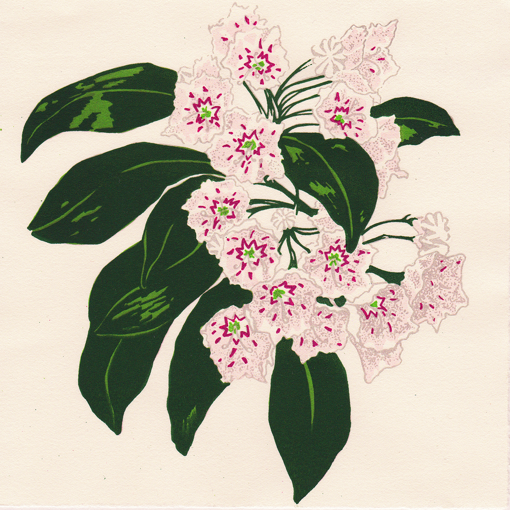 "Mountain Laurel , 2015. Water-based screenprint on Rives Lightweight Paper, 6.5"" x 6.5"".   © 2015 Kristen Necessary"