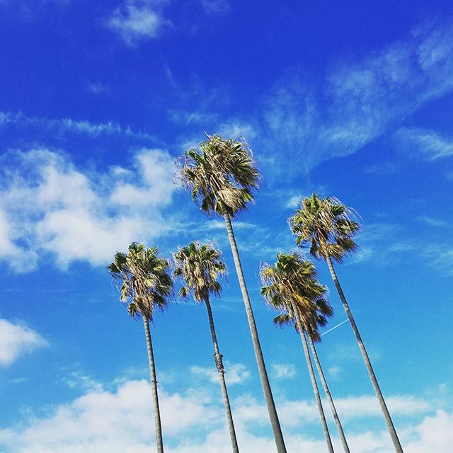 Have a wonderful weekend! #palmtrees #tropical #paradise #weekend