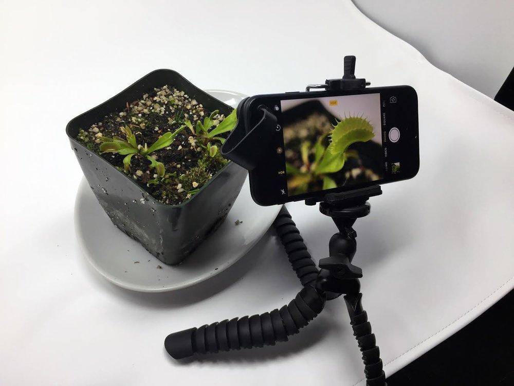 An iPhone, a LOHA Tripod, a LOHA Lens, and a Venus Fly Trap.