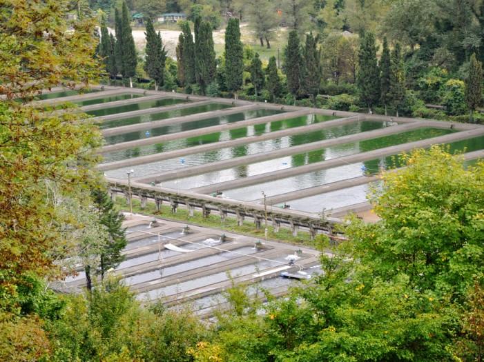 Eildon Trout Farm.jpg