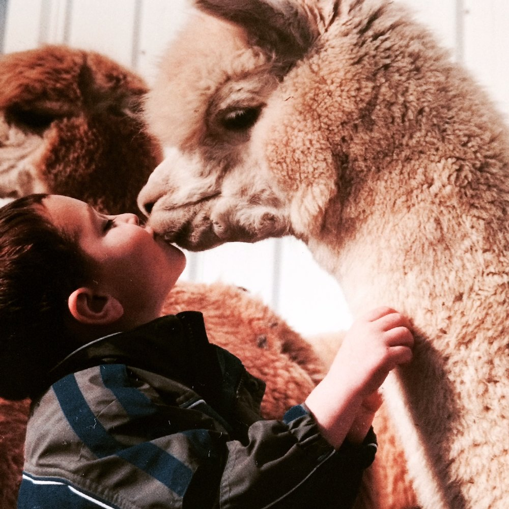 Alpaca and a boy.JPG