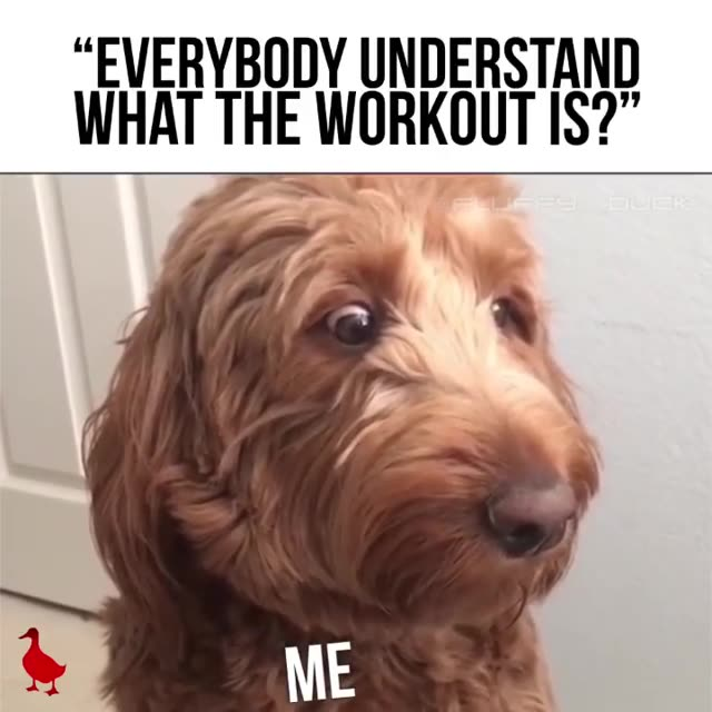 How often do you feel like this?    What's the Workout?