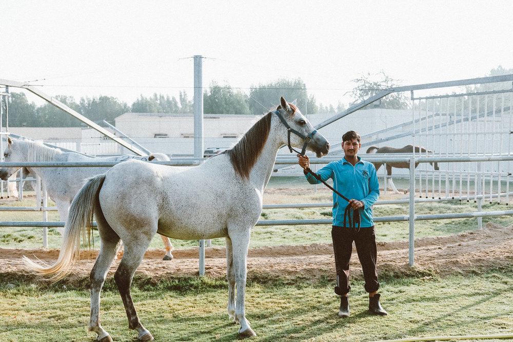BLONDANDUNBRUSHED_HORSERIDING_06.JPG