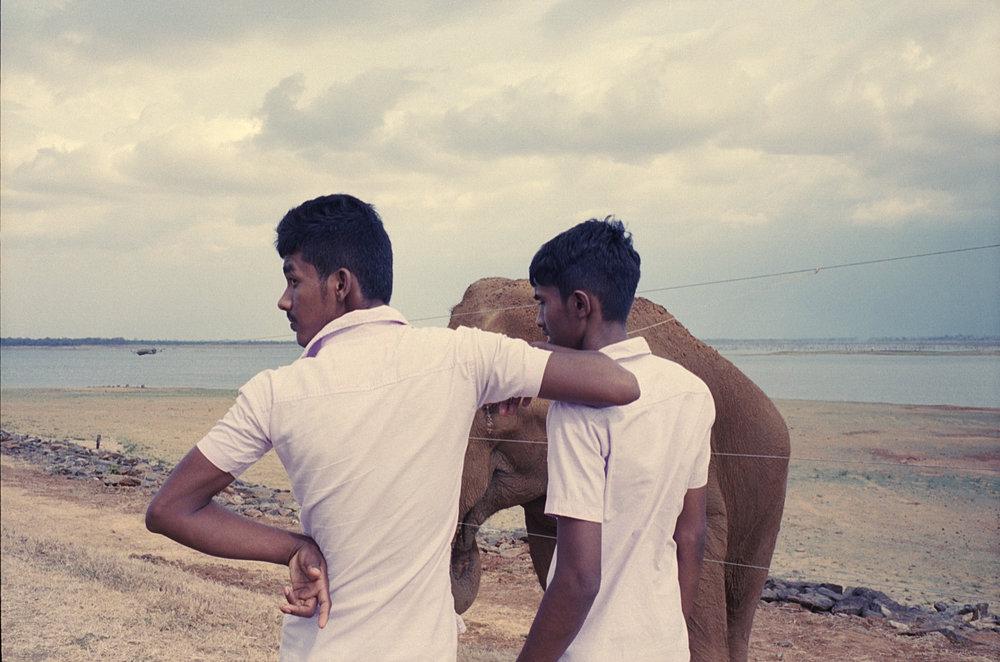 SriLanka_Elefant1_mørk.jpg