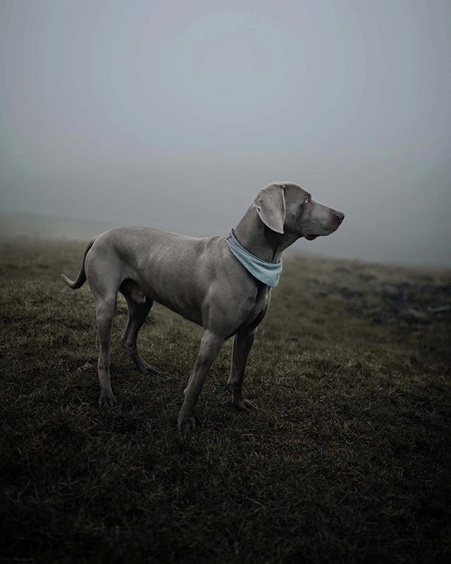 Make visible what, without you, might perhaps never have been seen... ~Robert Bresson. Muted sounds, stillness, a walk in the fog with the boy...