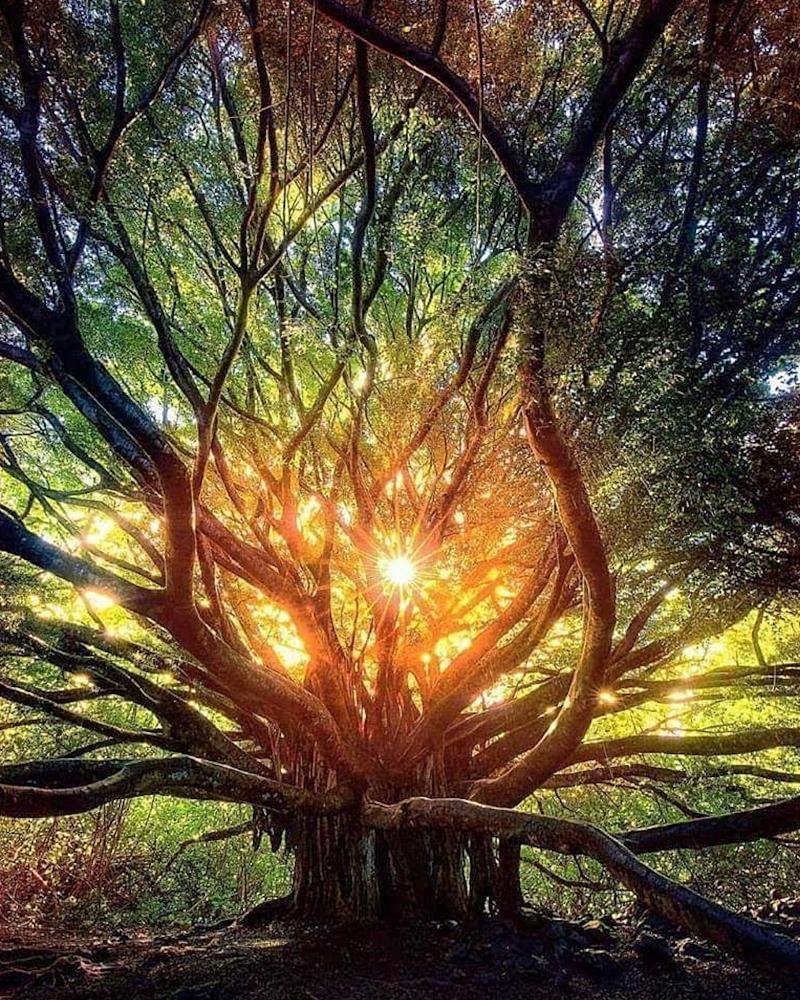 hypnotic journey image.jpg