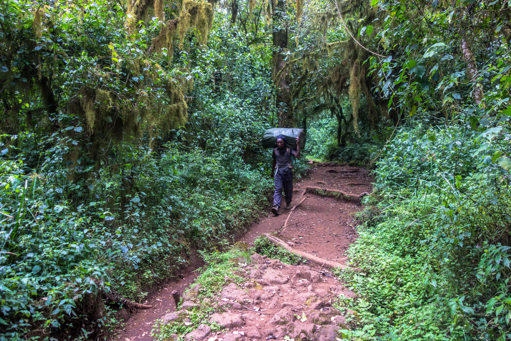kilimanjaro_rainforest