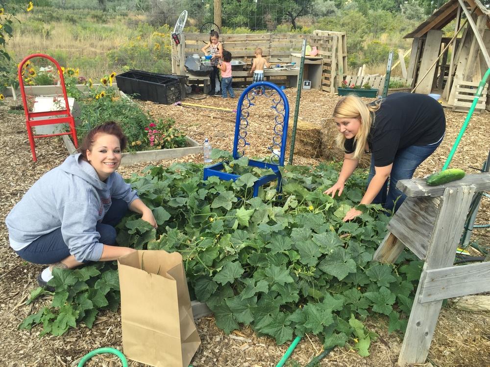 Gardens 2015-09-02 003.JPG