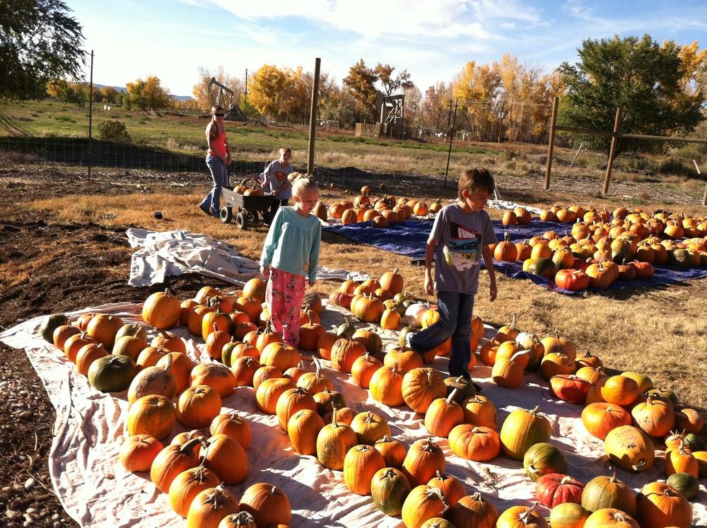 pumpkins 2014-10-23 006.JPG