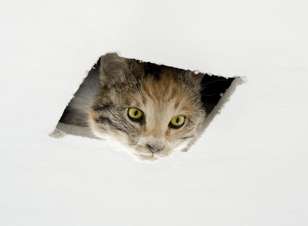 Eva-and-Franco-Mattes-Ceiling-Cat-440x323.jpg