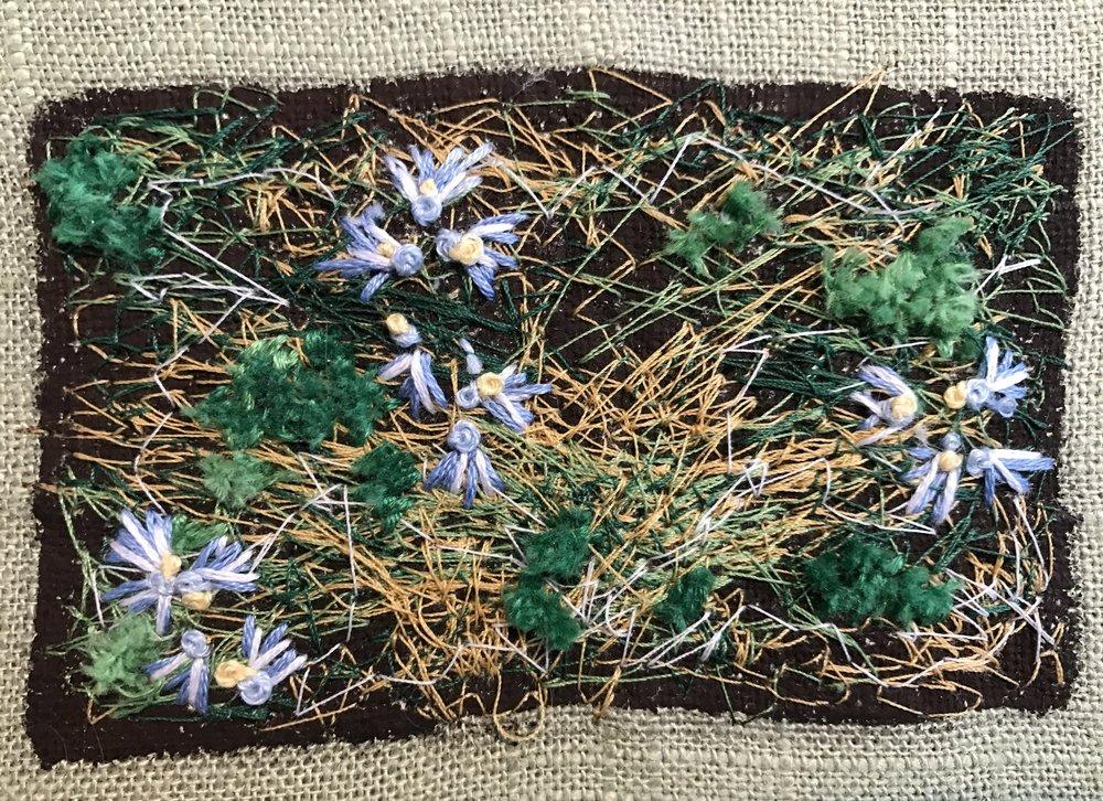 Dry Lichen.JPG