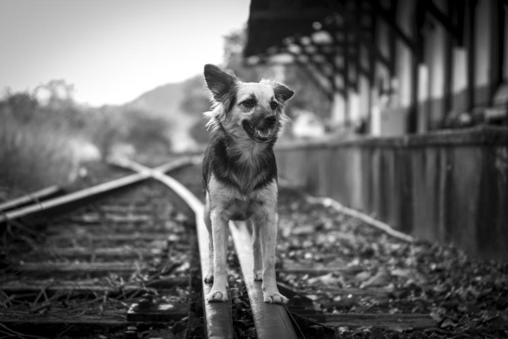 DOG_TRILHO.jpg