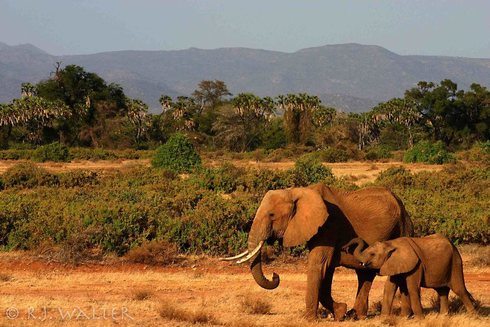 RJW_Save The Elephants_Samburu, Kenya_Summers 06-07_-.jpg