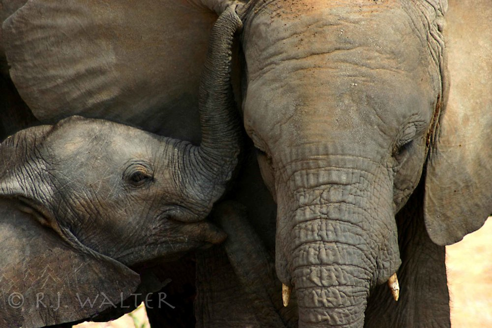 RJW_Save The Elephants_Samburu, Kenya_Summers 06-07_-1.jpg