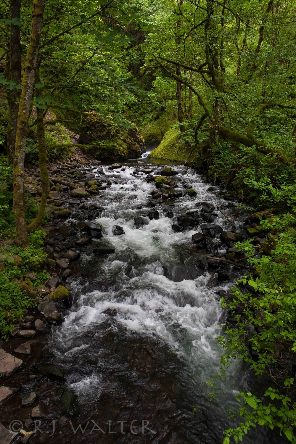 BW_Columbia River Gorge_Oregon_June 2013-6396.jpg