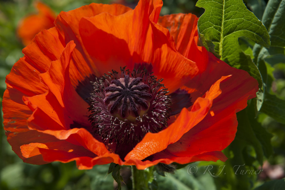 BW_Flowers_Karens Garden_May 2013-6058.jpg