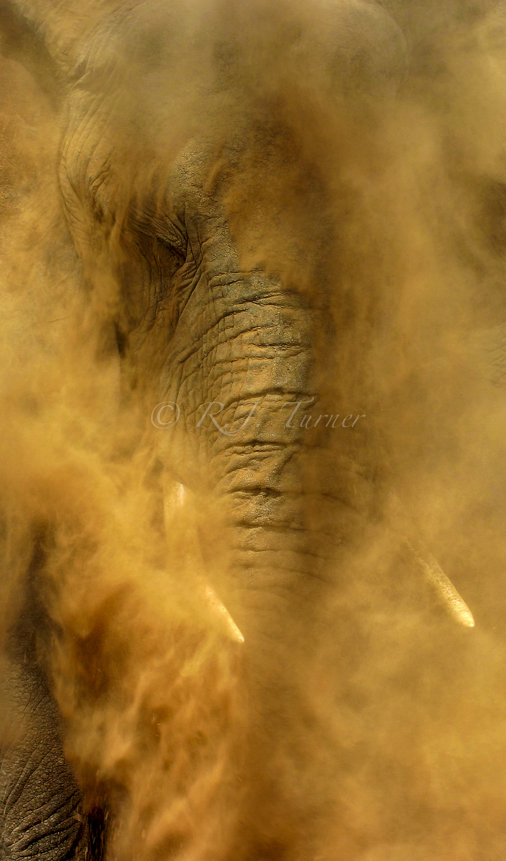 In 2016 R.J. was selected as one of the 65 World's Top Wildlife Photographers to become a part of the coffee table book and art exhibition  Remembering Elephants.  Sharing their work and love of elephants,  Remembering Elephants  shows the world the beauty and magic of these gentle giants, and why we must protect this incredible species from mass extinction due to poaching. In September the coffee-table book and art exhibition premiered at La Galleria, Pall Mall in London, with all proceeds going to anti-poaching efforts in Africa. Visit  www.rememberingelephants.com  for more information.