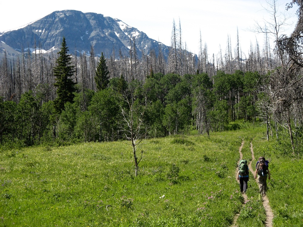 [image: In the background, the sky is white with clouds, and there is a single mountain rising into the sky with some snow patches. Two people with backpacking backpacks are walking down parallel trails through a green, grassy meadow. They are walking towards a dense forest of green trees, in the direction of the mountain.]