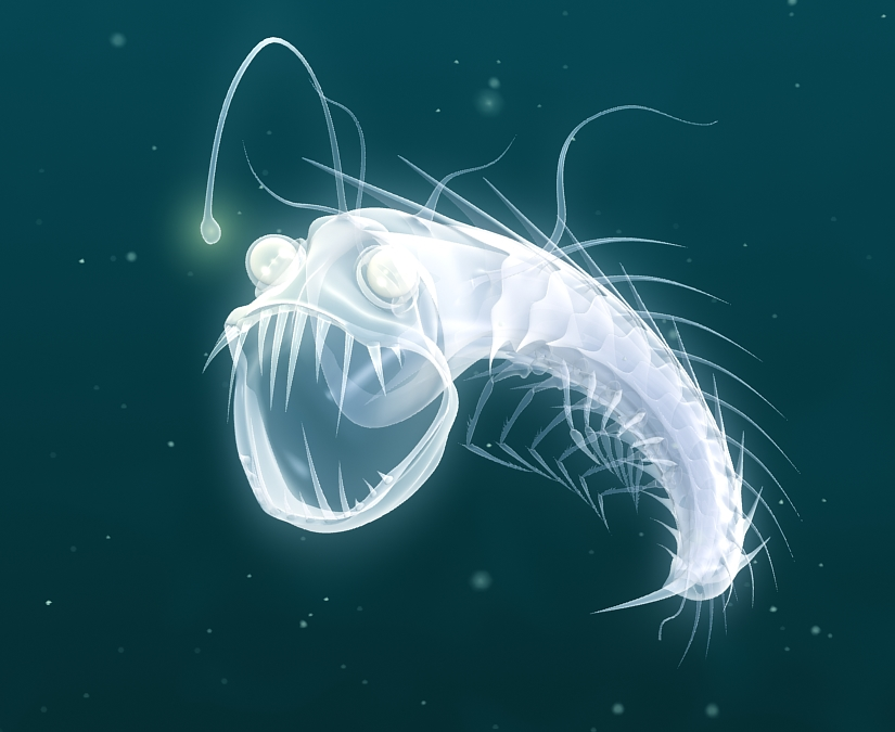 [image: A graphic art design of an anglerfish, glowing deep underwater. It has light hanging in front of its head with its mouth open, showing long pointed teeth.] Thank you Google Images