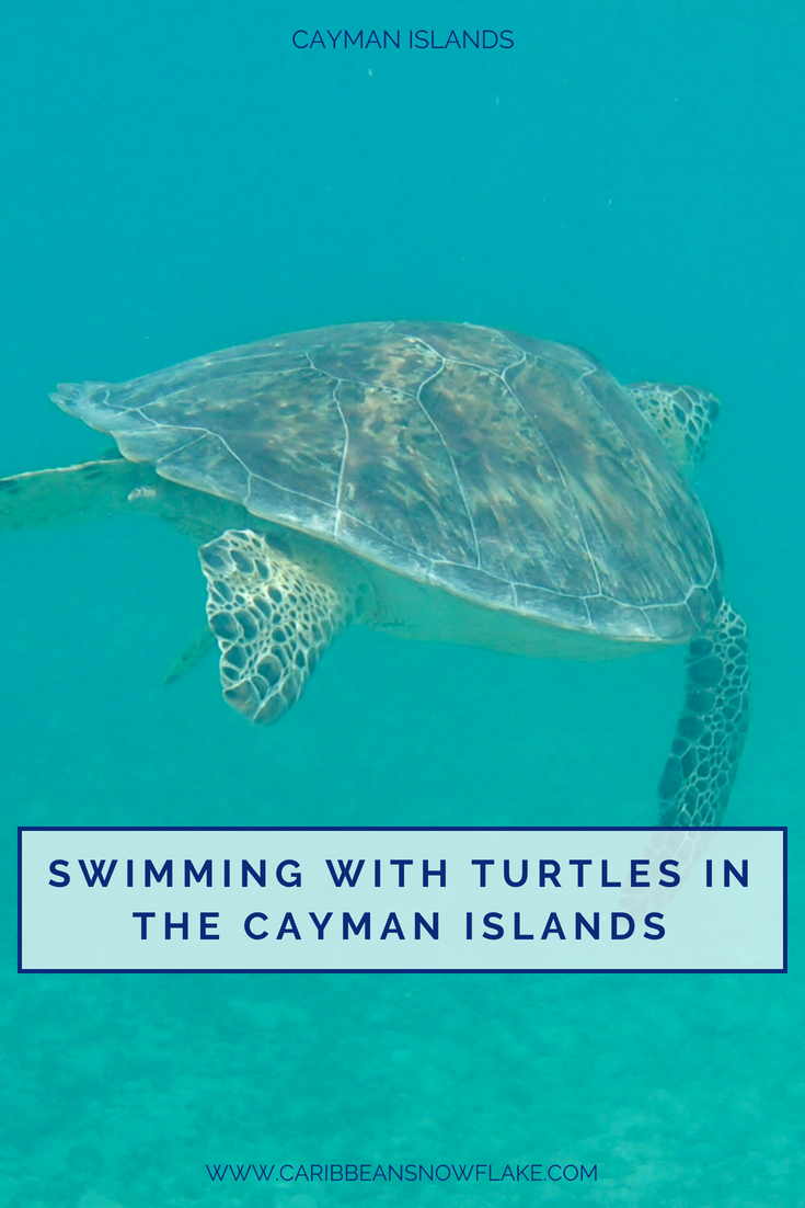 Swimming with turtles in the Cayman Islands - local guide on www.caribbeansnowflake.com.png