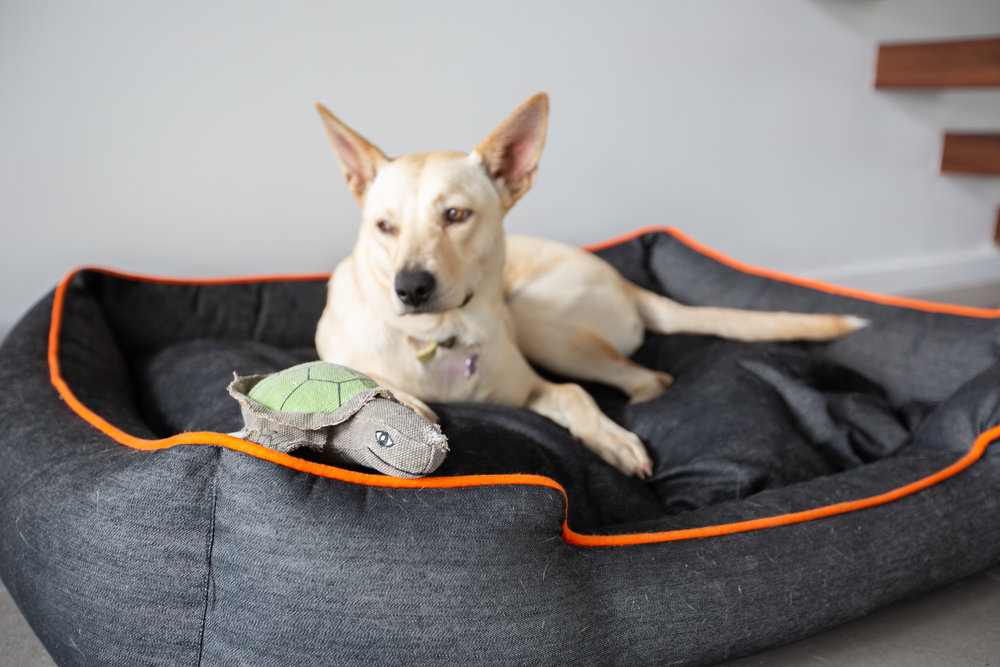 Dog Bed    //    Dog Toy    //    Dog