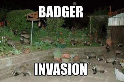 Badger 029.jpg