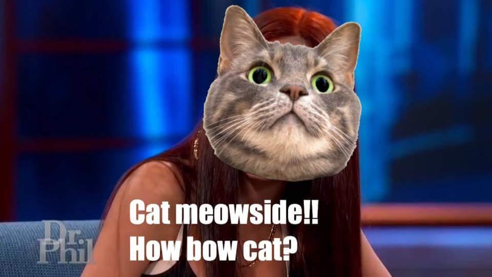 You cat a problem?