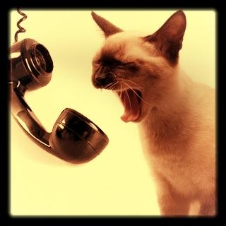 Call Us - 415.903.PLEX(7539)