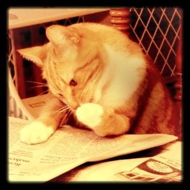 The Docket - Click the cat!