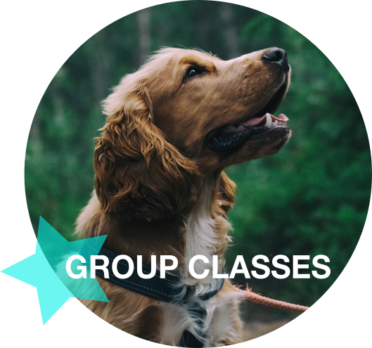 Group Classes White.png