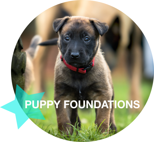 Puppy Foundations.png