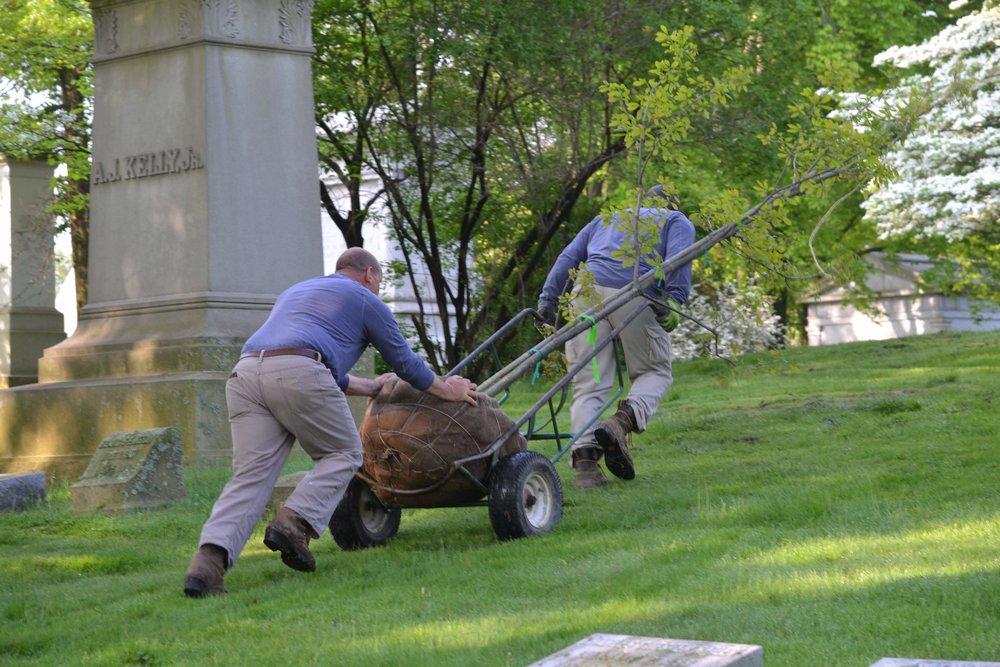 Homewood Cemetery Historical Fund Tree Planting