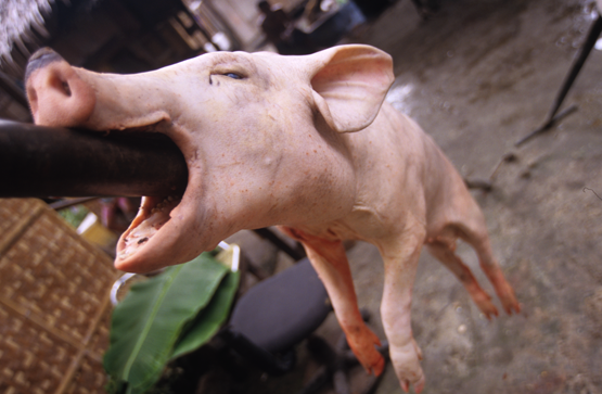 Pork anyone? Check out the new version of:  http://www.victorspinelli.com/