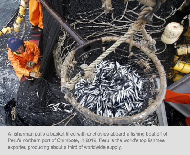 Want To Reduce Your Carbon Footprint? Choose Mackerel Over Shrimp    http://www.npr.org/blogs/thesalt/2014/07/29/336301714/want-to-reduce-your-carbon-footprint-choose-mackerel-over-shrimp?sc=17&f=1001&utm_source=iosnewsapp&utm_medium=Email&utm_campaign=app