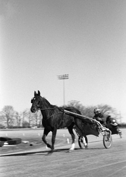 Harness Racing at Yonkers Raceway in Westchester County, New York. BW film. Victor Spinelli Archive