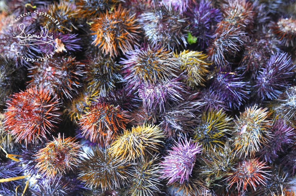 Photo of the day. Sea Urchins in Catania, Sicily 2010