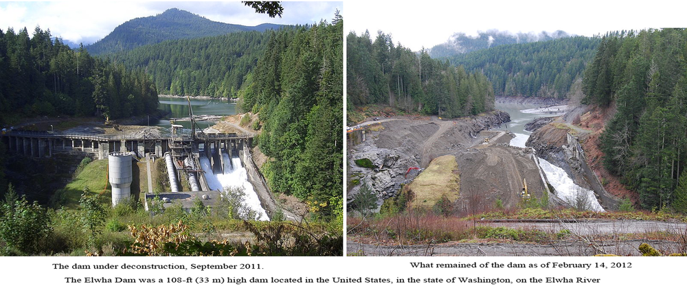 One Dam gone (The Elwha) and many to go. Go Salmon!