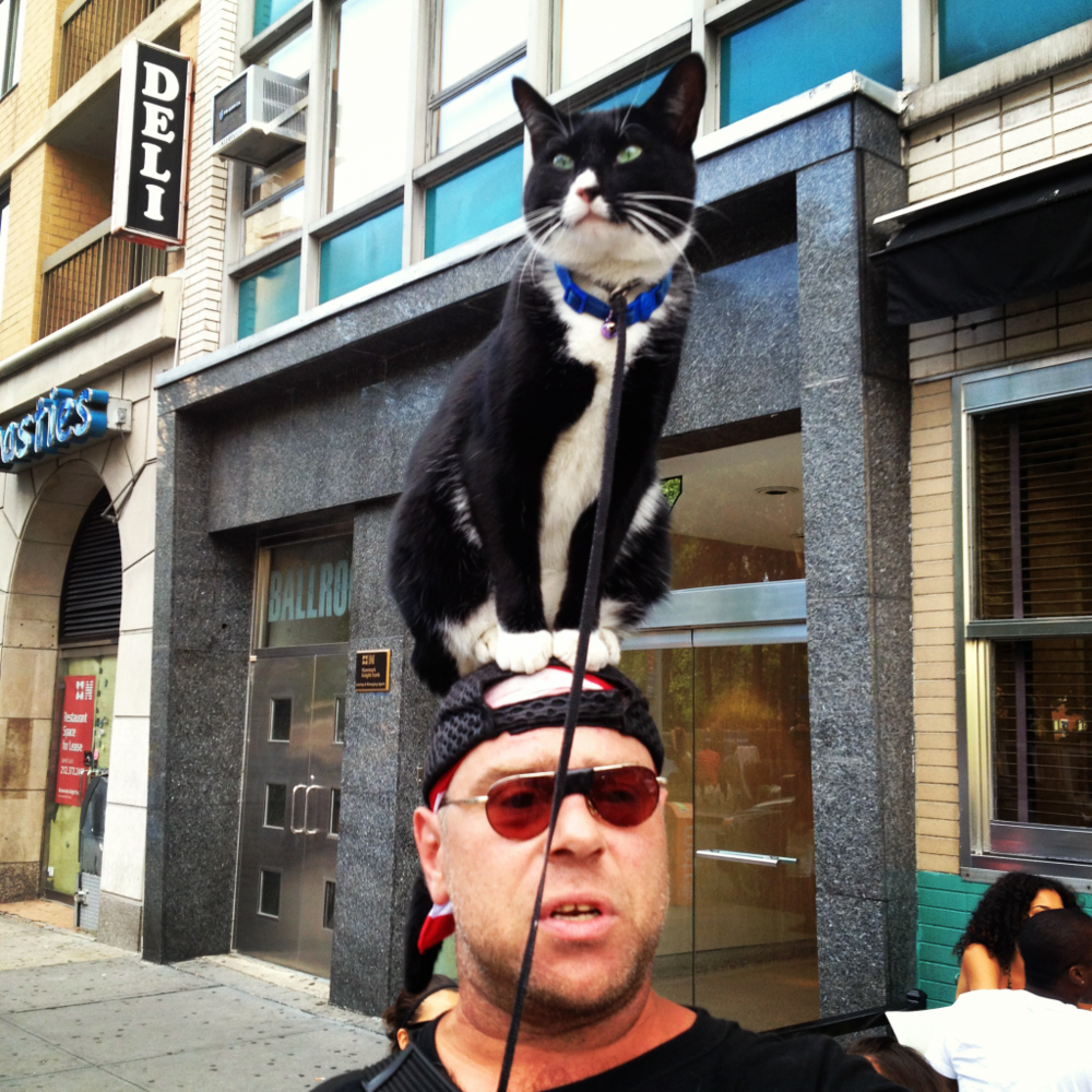 Cat on the hat! NYC