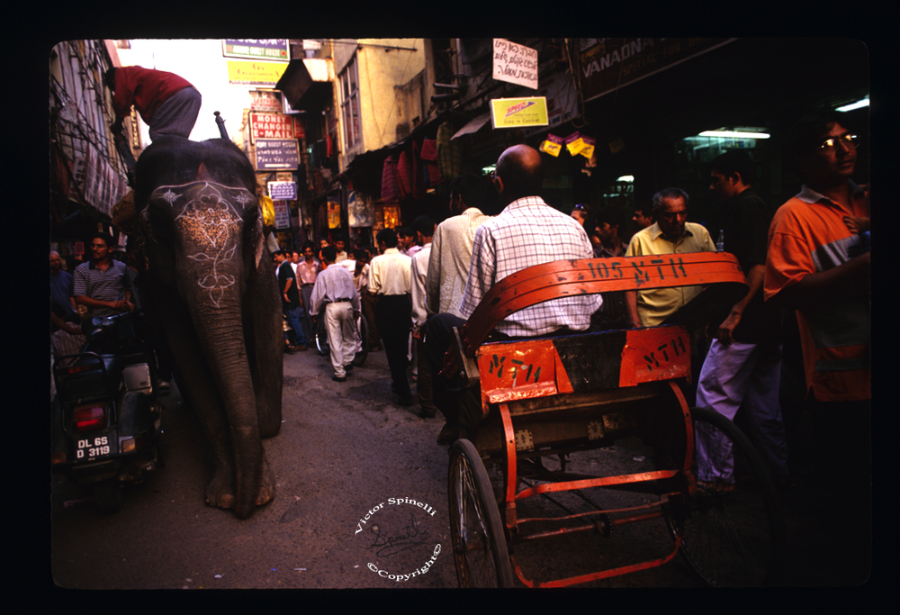 Delhi-Victor Spinelli-Elephants-India.png
