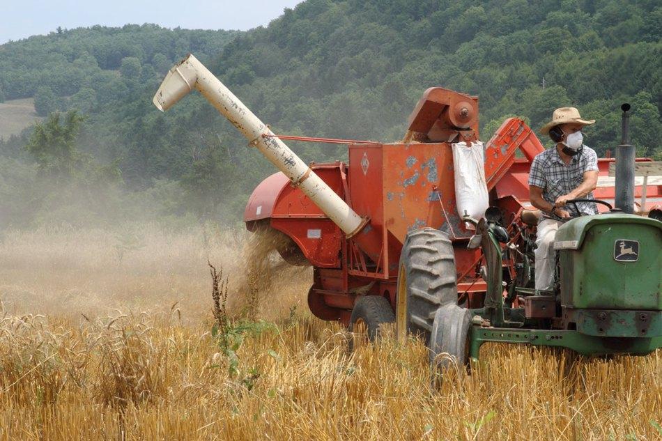 michael-harvesting.jpg