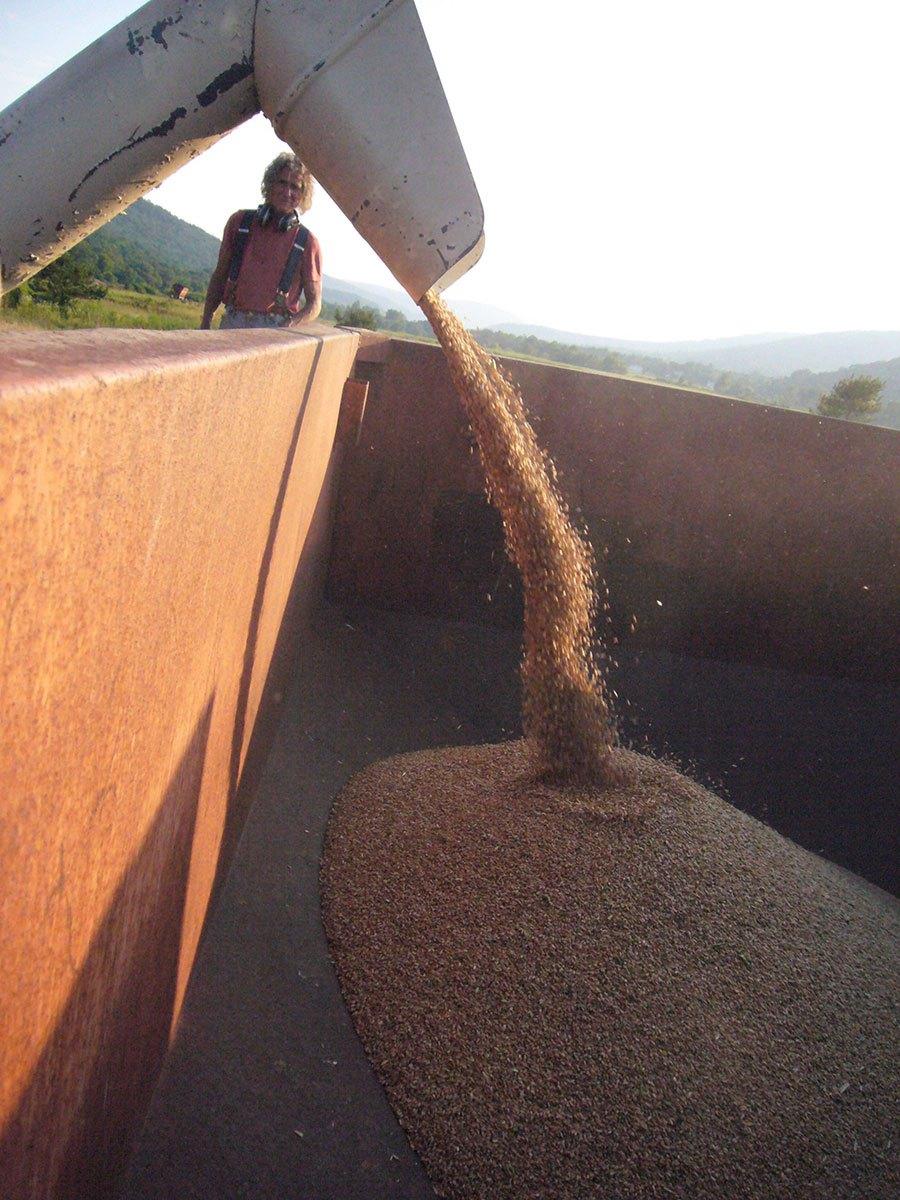 richard-watching-first-grain.jpg