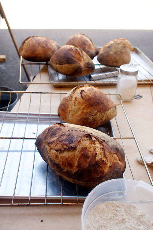 finished-loaves.jpg