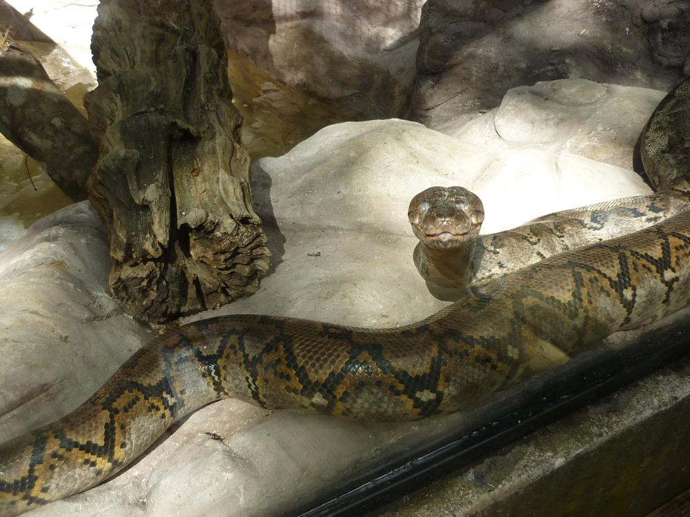python-reticule-5metres.JPG