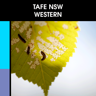 Design-Colour-TAFE-NSW-Western.png