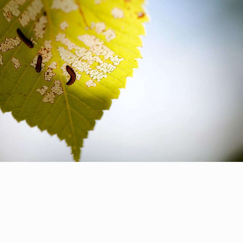 TafeWestern-Design-Tye-Naden-a-grubslife02.jpg
