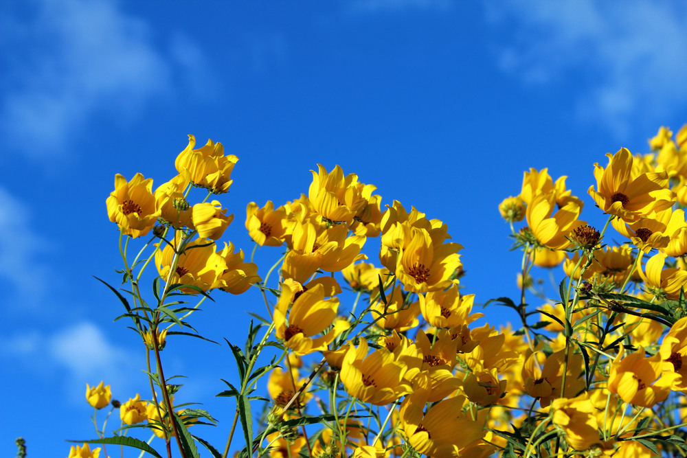 sky and yellow wild flowers.jpg