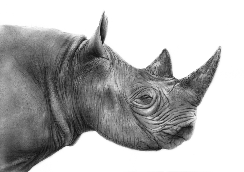 rhino asleep.jpg