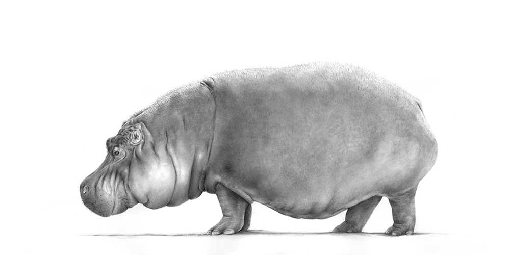 hippo1600x800.jpg