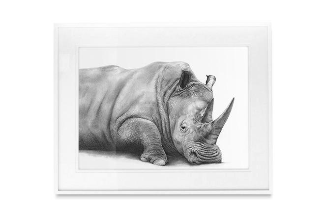 Stampede StyleBaako the Rhino —